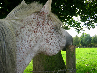 Horse scratching an itch