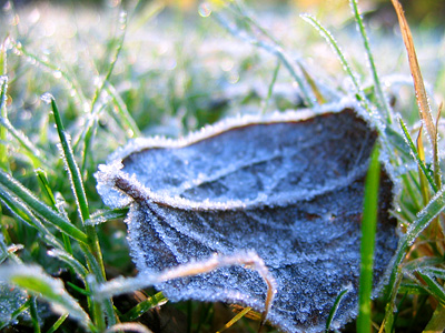Frost on a leaf on the Grand Union Canal towpath at Tring