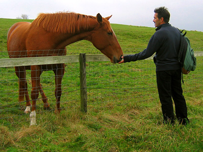 Brad feeding a horse near Springbottom Farm